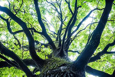 Хозяин леса и природы
