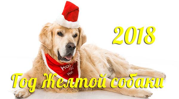Земляная (желтая) собака по китайскому гороскопу