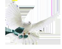Крещенский голубь